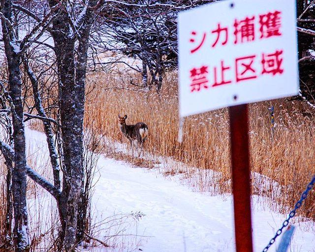 北海道根室市落石 nemuro-shi,hokkaido,japan よくある光景