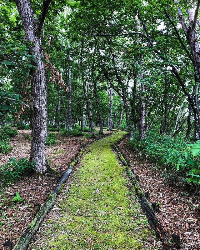 北海道標津郡標津町 shibetsu-cho,hokkaido,japan ポー川の夏